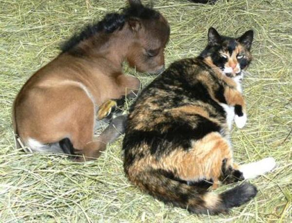 The adorable horse with his cat friend.