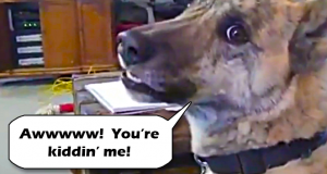Ultimate dog tease video is super hilarious.