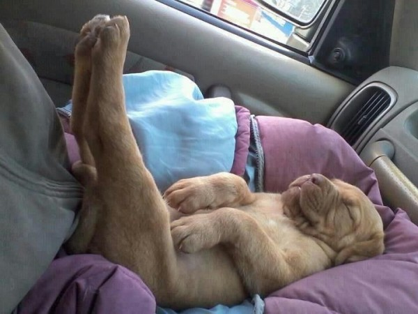 Cute puppies sleeping in the weirdest positions ever.