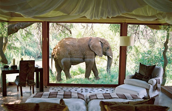 Best Hotel Rooms With A View In Nakanyane Safari Lodge In South Africa.