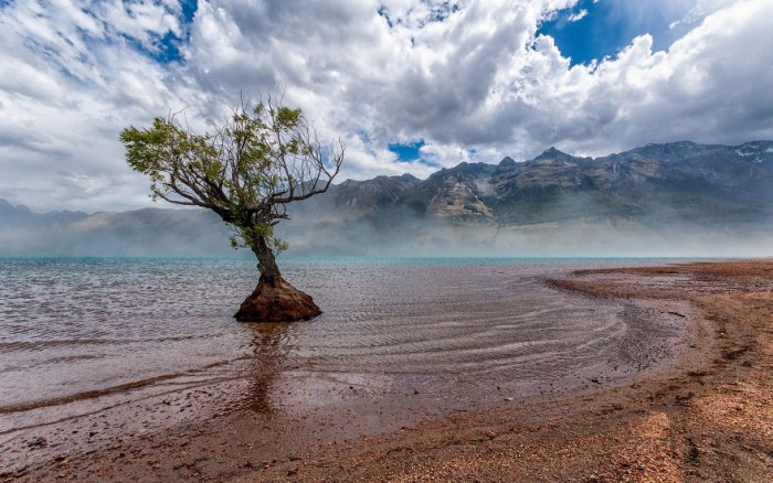 Lone tree Glenorchy in New Zealand.