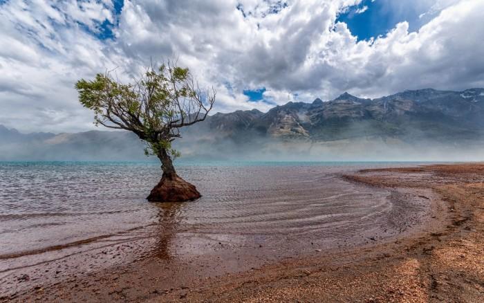 Lone tree Glenorchy in New Zealand.