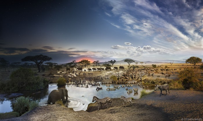 Stephen Wilkes Photography - Serengeti National park in Tanzania