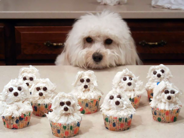 Puppy cupcakes look so cute.