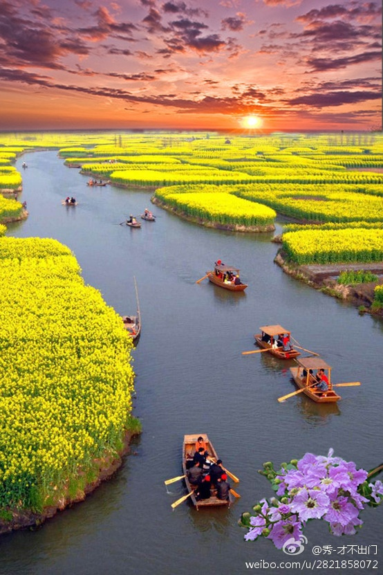Top reasons why to visit China - Canola Flower fields.