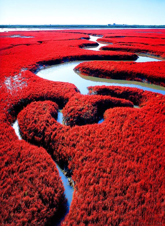 Top reasons to visit China - Red beach in Panjin.