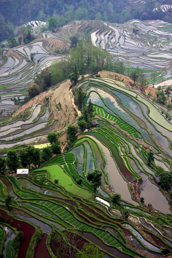 Top reasons why to visit China - Yuanyang rice terraces.