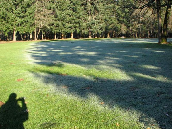 An image of a park half-covered by frost.