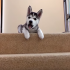 Watch the video about the funny dogs who can't figure out stairs.