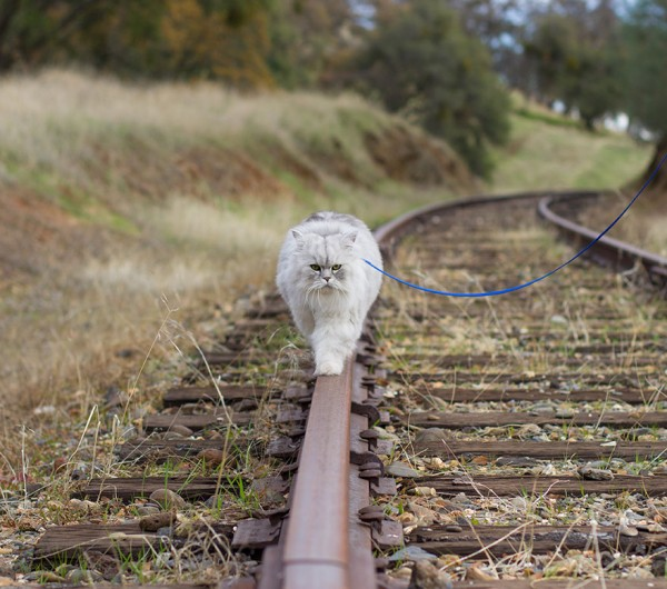 Gandalf the traveling cat loves his leash.