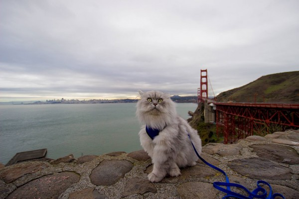 Gandalf the traveling cat enjoys traveling more than you would expect.
