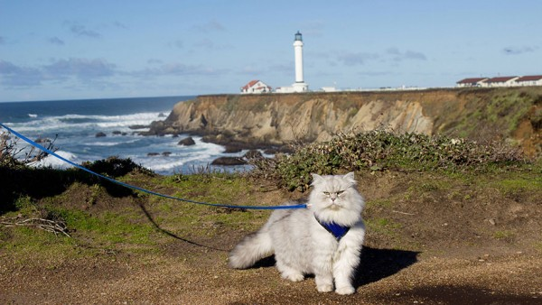 Meet Gandalf the traveling cat who enjoys traveling so much.
