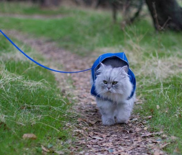 Gandalf the traveling cat even has his own rain coat.