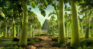 Celery Forest is one of the most incredible landscapes made of food by Carl Warner.