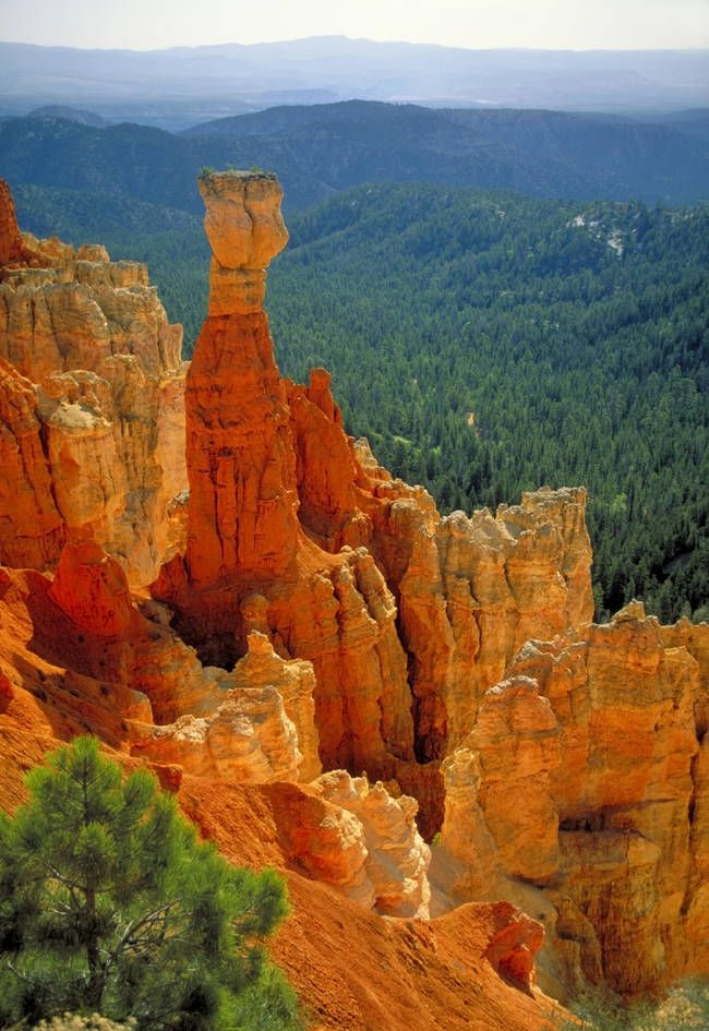 Bryce canyon National Park in Utah  is one of the most magical places on the planet.