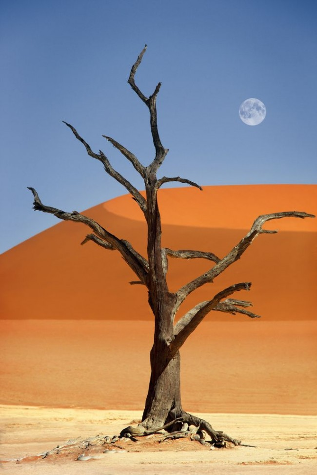 Namib Desetrt is one of the most magical places on the planet.