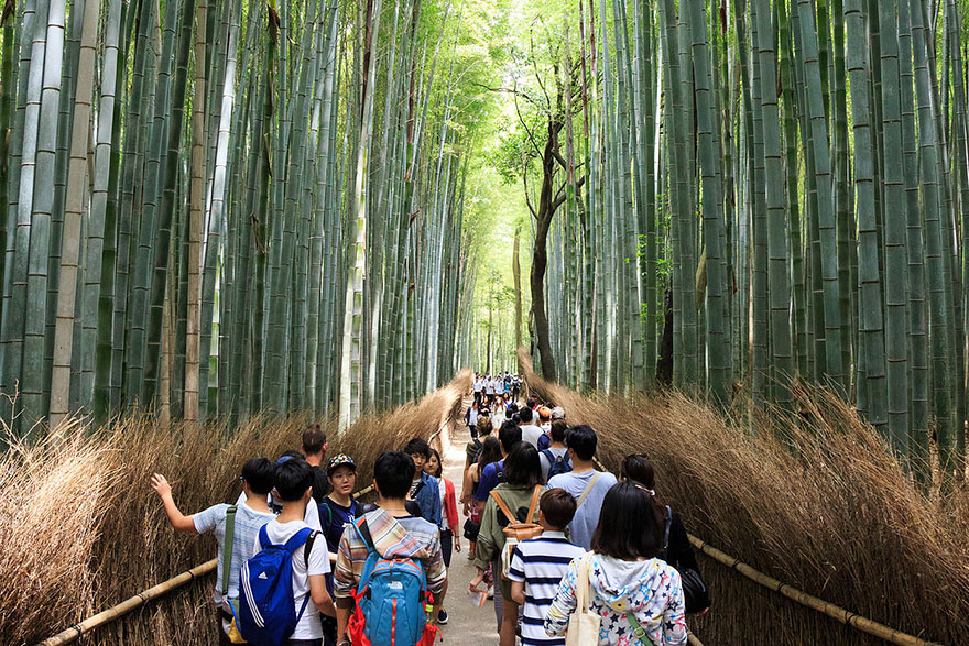 This is what Arashiyama Bamboo forest looks like during high and low season.