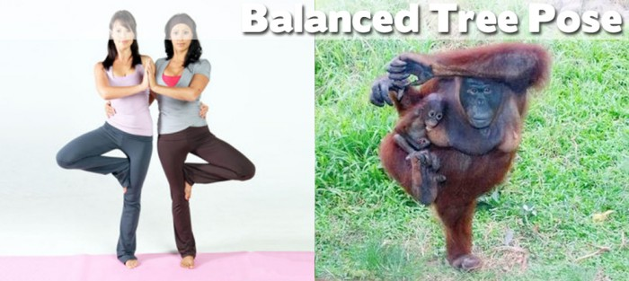 Take a look at our compilation of 20 cute animals doing yoga. This is a balanced tree pose
