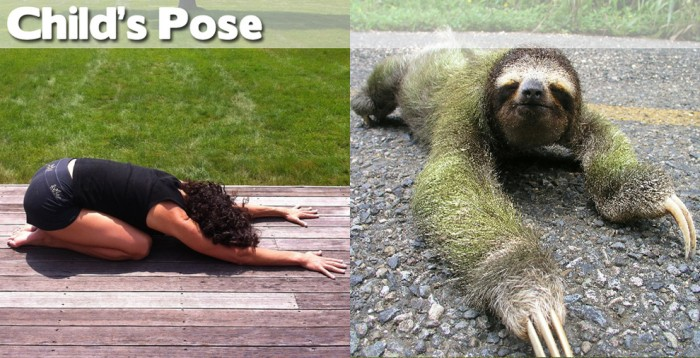 Take a look at our compilation of 20 cute animals doing yoga. This is a child's pose.