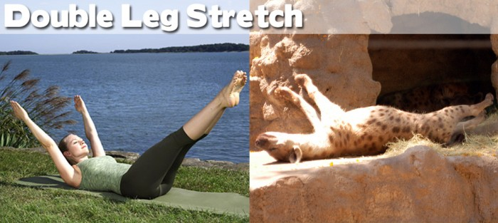 Take a look at our compilation of 20 cute animals doing yoga. This is a double leg stretch pose.