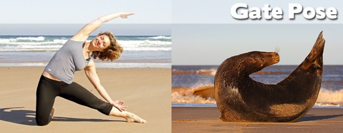 Take a look at our compilation of 20 cute animals doing yoga. This is a gate pose.