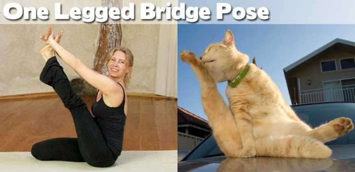 One legged-bridge pose done by one of the 20 cute animals doing yoga.