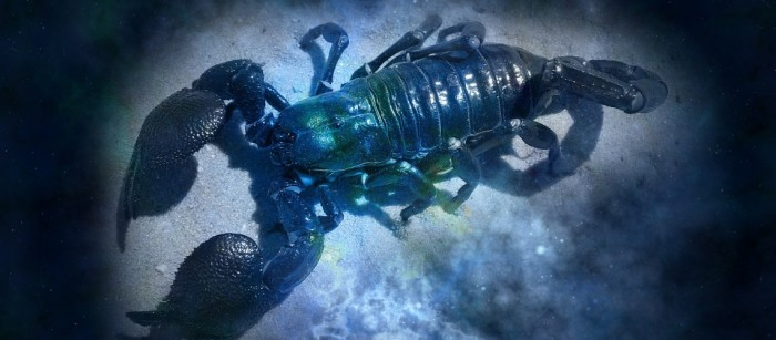 Scorpio 2017 horoscope predictions will give you a clear insight into how this year is going to turn out for all Scorpions.