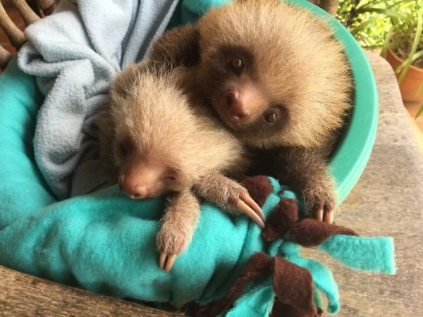 20 Unbelievably cute sloth photos will put a smile on your face.