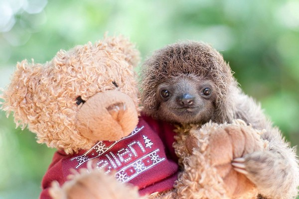 20 Unbelievably cute sloth photos will brighten your day.