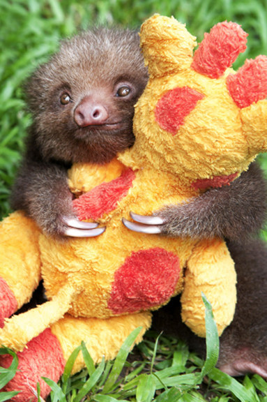 These are the happiest sloths in the world.
