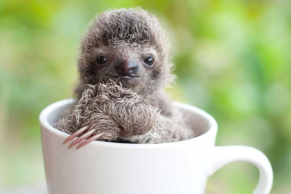 20 super cute sloth photos will brighten your day.