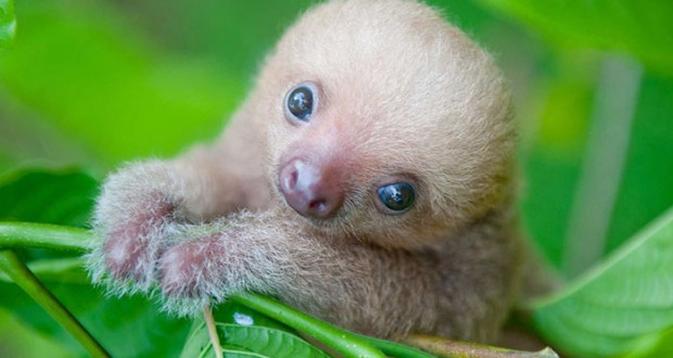 20 super cute sloth photos will put a smile on your face.