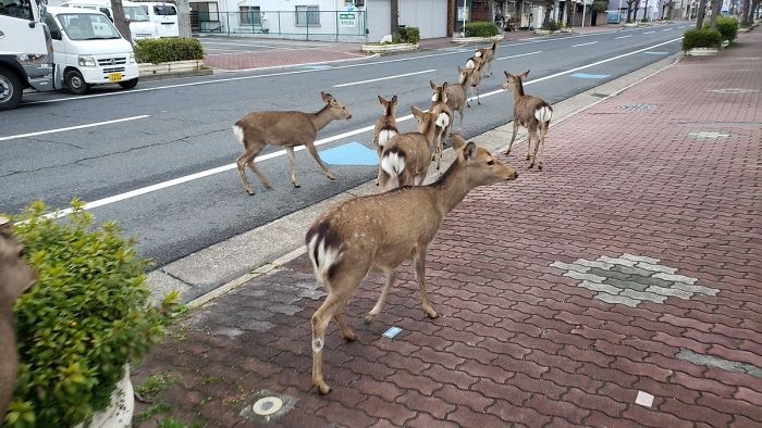 Animals on the streets during corona virus quarantine.