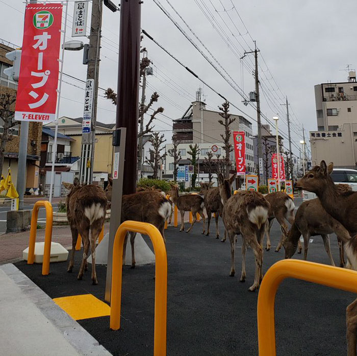 People see deer roaming freely in the city of Nara.