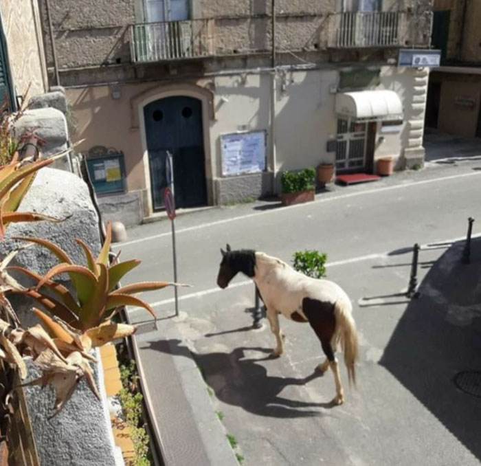 A random horse roaming the empty streets in Italy during coronavirus quarantine.