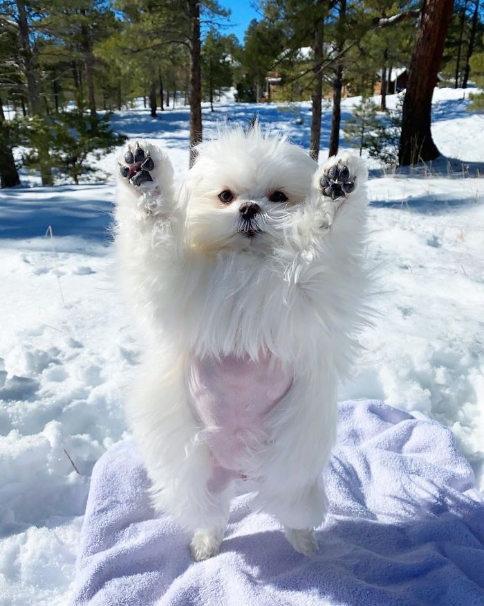 Coco likes to stand up with her paws up in the air.