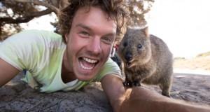 This is the best Quokka selfie ever!