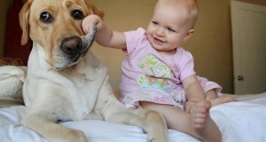 This photo presents one of the most adorable baby-dog friendships.