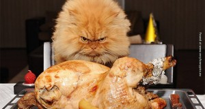 Funny pictures of cats and dogs looking at food.